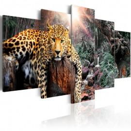 Quadro - Leopard Relaxation