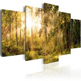 Quadro - Magic of Forest
