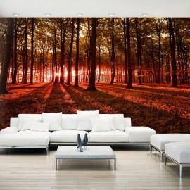 Papel de parede autocolante - Autumn Morning II