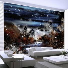 Fotomural - Noche en el bosque