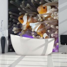 Fotomural - Clownfish