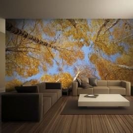 Fotomural - Copas das árvores outonais