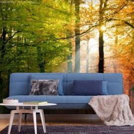 Papel de parede autocolante - Forest Colours