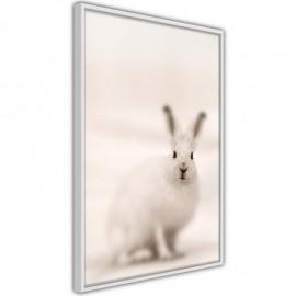 Póster - Curious Rabbit