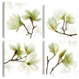 Cuadro - Admiración de magnolia