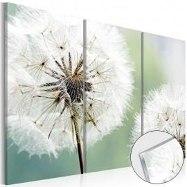Quadro acrílico - Fluffy Dandelions [Glass]