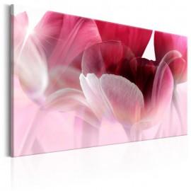Quadro - Nature: Pink Tulips