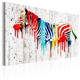 Quadro - Colourful Zebra