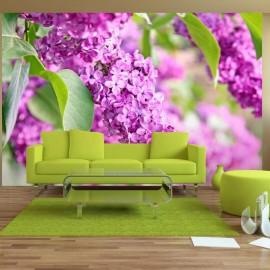 Fotomural - Flores de la lila
