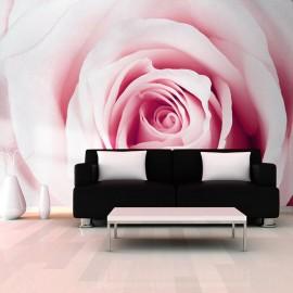 Fotomural - Laberinto rosa