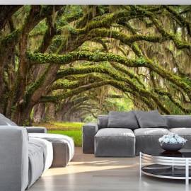 Fotomural - Tree embrace