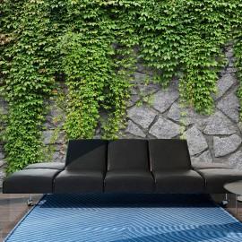 Fotomural - Muro verde