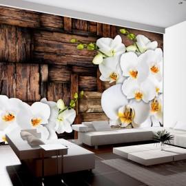 Fotomural - Orquídeas florecientes