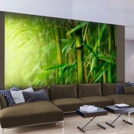 Fotomural - jungle - bamboo