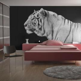 Fotomural - Tigre branco