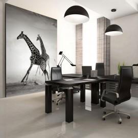 Fotomural - Girafas