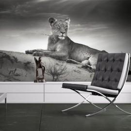Fotomural - Preto e branco leoa