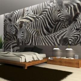 Fotomural - Manada de zebras
