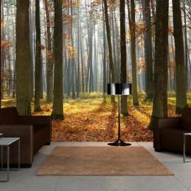 Fotomural - Autumn trees
