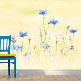 Fotomural - Centaurea
