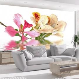 Fotomural - Flores tropicales, árbol de las orqídeas (bauhinia)