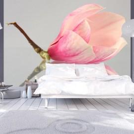 Fotomural - Una flor de magnolia solitaria