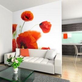 Fotomural - Poppies on the wihite background