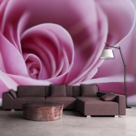 Fotomural - Una rosa de color rosa