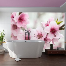 Fotomural - Árvore de primavera, florescendo - flores rosa