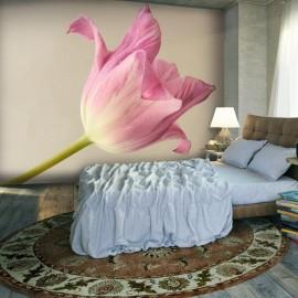 Fotomural - Pink tulip