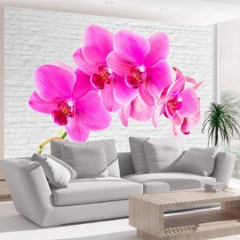 Fotomural - Pink excitation