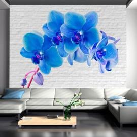 Fotomural - Blue excitation
