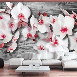 Fotomural - Callous orchids