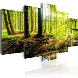 Quadro - Poetry of a Forest