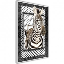 Póster - Zebra in the Frame