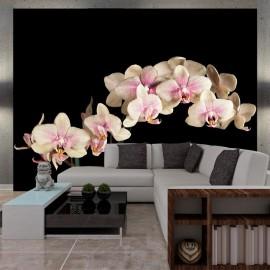 Fotomural - Orquídea florescente