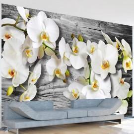 Fotomural - Orquídeas frías