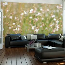 Fotomural - Delicados florecitos blancos