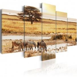 Quadro - Zebras on a savannah