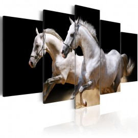 Quadro - Gallop- freedom and power