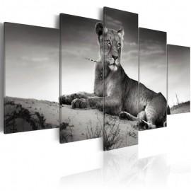 Quadro - Lioness in a desert