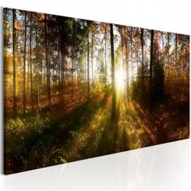 Cuadro - Beautiful Forest