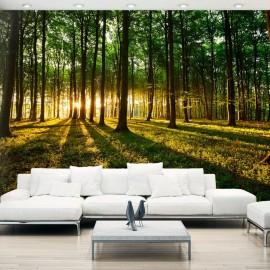 Papel de parede autocolante - Mystical Morning