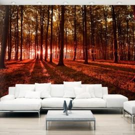 Papel de parede autocolante - Autumn Morning