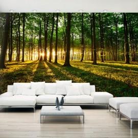 Papel de parede autocolante - Mystical Morning II