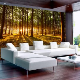 Papel de parede autocolante - Summer: Morning in the forest