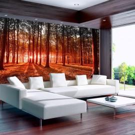 Papel de parede autocolante - Autumn: morning in the forest