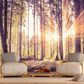 Papel de parede autocolante - Forest Afternoon