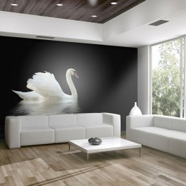 Fotomural - cisne (preto e branco)