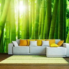 Fotomural - Sol y bambú